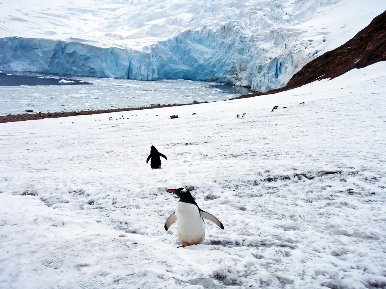 南極の面積は日本の何倍?人はすんでいる?国土の大きさや違いを比較!
