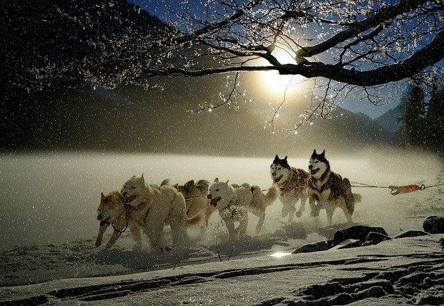 犬ぞりは国内だとどこで体験できる?乗ってみると爽快感抜群!
