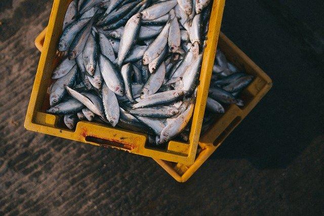 陸奥湊駅前朝市で絶品新鮮海鮮朝ごはん!八戸ならではのグルメが楽しめる!
