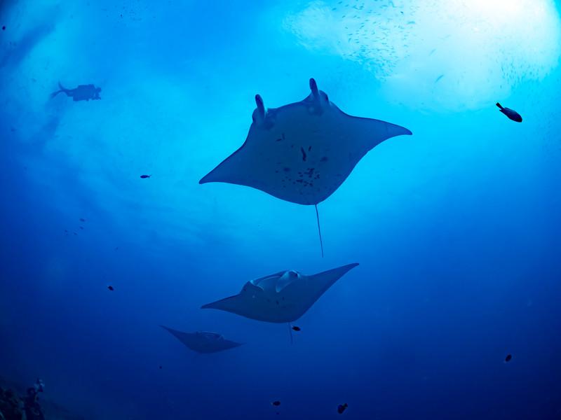 ダイビング用のカメラは何がおすすめ?水中で使える防水カメラをご紹介!