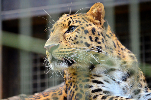 yokohama zoo