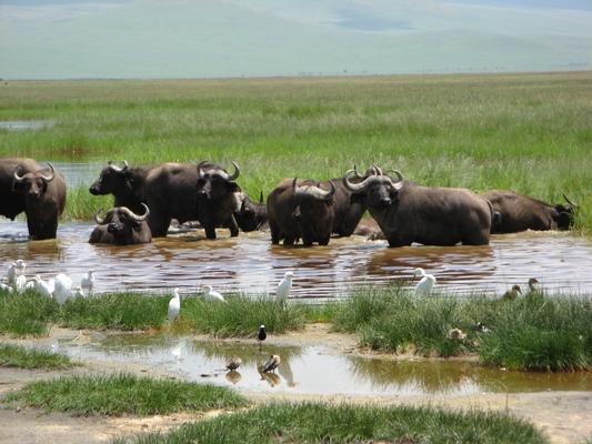 ンゴロンゴロ保全地域(タンザニア)観光でマサイ族に会える