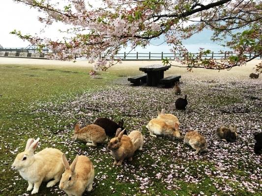 島 広島 うさぎ