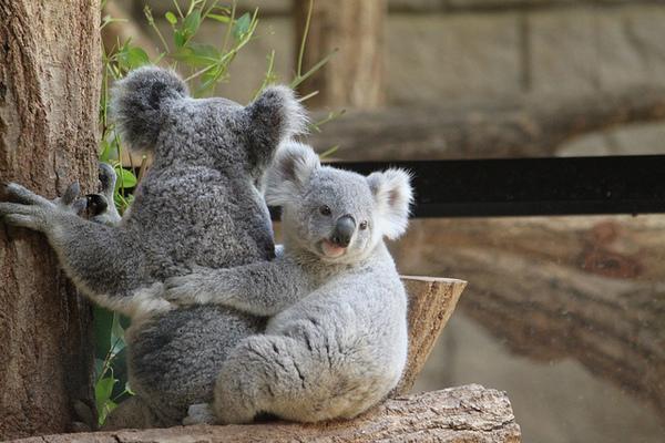 東山動植物園の見どころ&楽しみ方!人気のお土産屋や混雑状況は ...