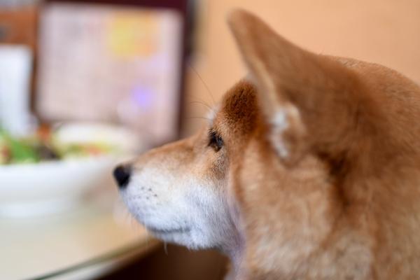保護犬カフェ堺店は愛犬も探せる人気店 おすすめのメニューを紹介