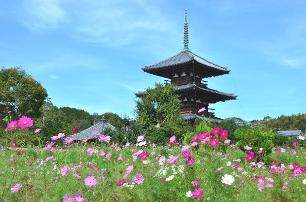 奈良『法隆寺』見どころやアクセスを徹底解説!御朱印やお土産・ランチ ...