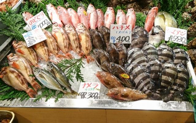 魚類 角 日野 場