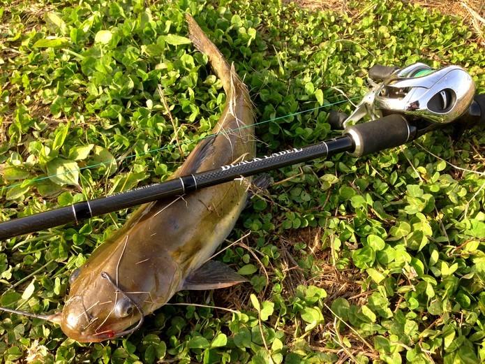 アメナマ釣りのタックル