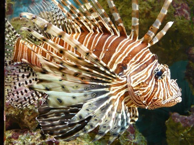 毒魚とは?刺毒魚の代表的な種類をご紹介!釣れたら棘に注意が必要!