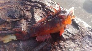 毒魚の代表的な種類をご紹介!防波堤や夜の海で釣れる危険な生き物たち