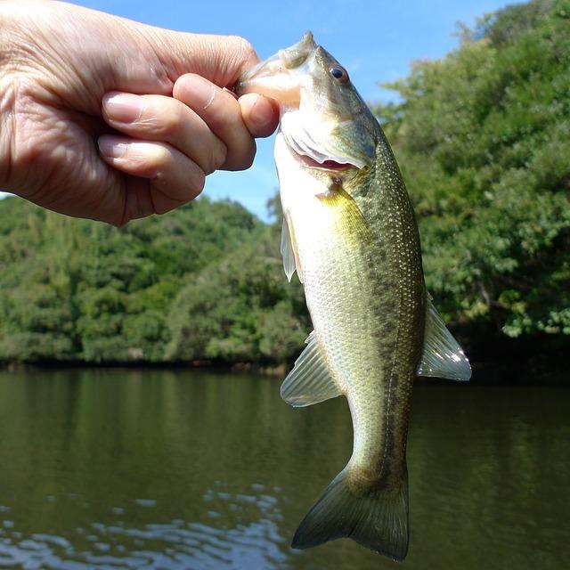 ネコリグとは?バス釣りでの使い所、ワームやフックの選び方をご紹介!