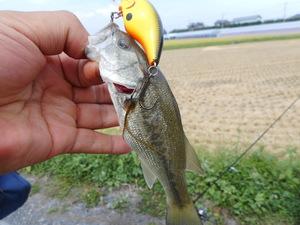 ウォブリングとは?ルアーの動かし方の特徴や釣れるアクションのコツをご紹介!
