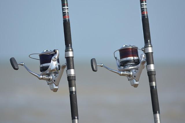 エギングロッドとシーバスロッドの違いは?特徴や釣れる魚を比較してご紹介!