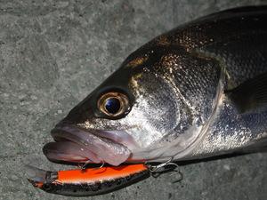 シンキングミノーとは?特徴と釣り方のポイント、動かし方などをご紹介!