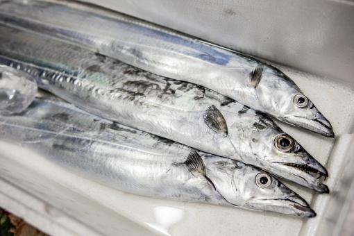 太刀魚の刺身の作り方は?皮や頭の処理の仕方、さばき方のコツをご紹介!