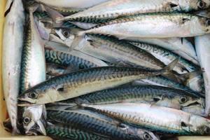 石狩湾新港の釣り場情報!ポイント別の釣れる魚やおすすめタックルをご紹介!