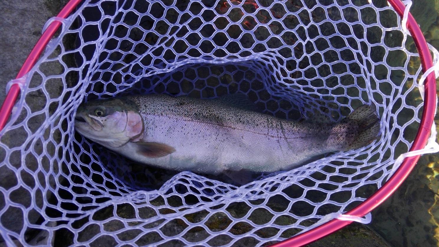 管釣りは初心者でも楽しめる!釣り方のコツやおすすめルアーをご紹介!