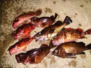 ジャリメは他の釣り餌と何が違う?種類ごとに価格などの特徴をご紹介!