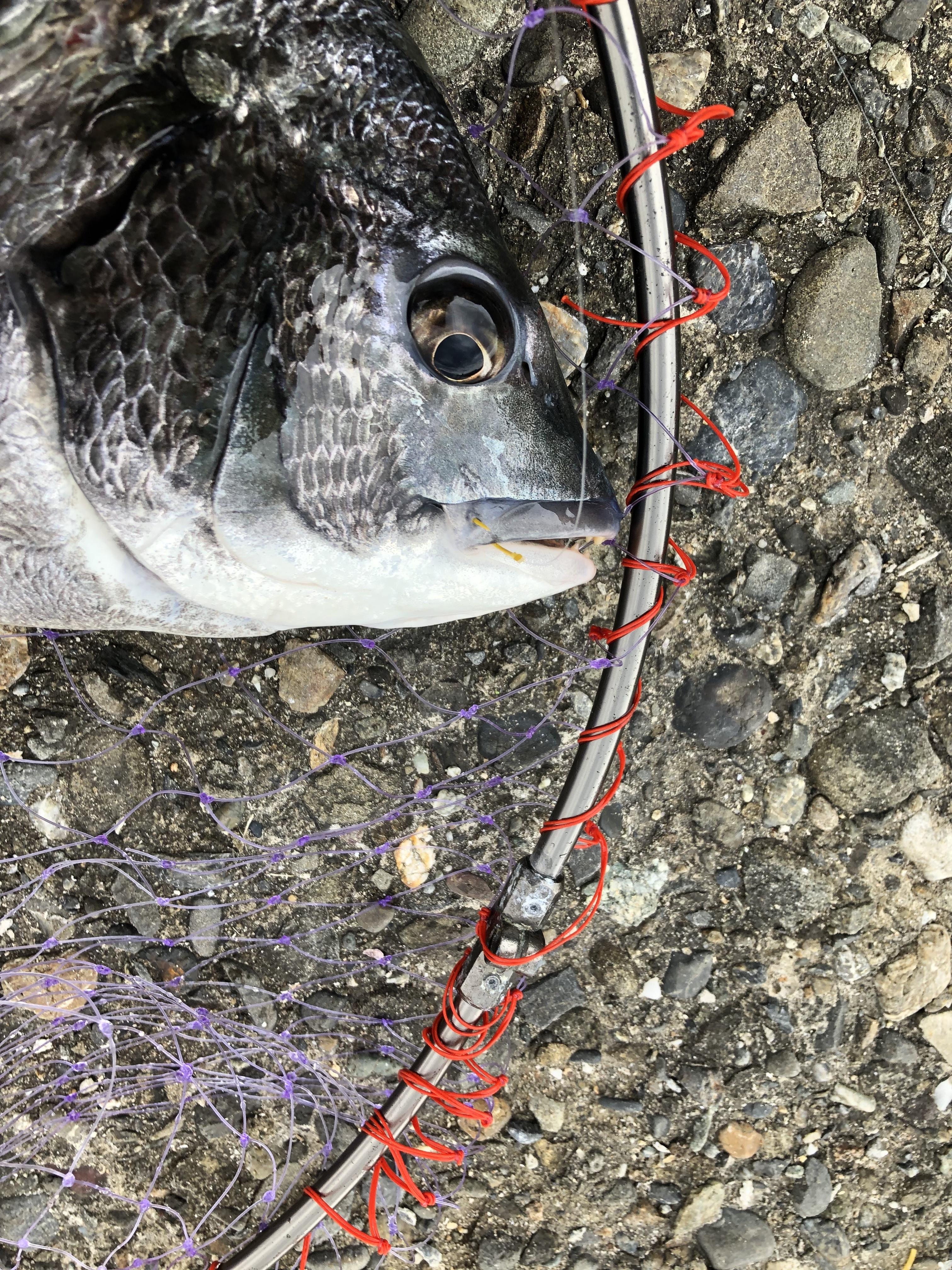 汐見埠頭の釣りポイントを解説!釣れる魚や立入禁止の場所は?