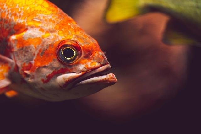 初心者向けロックフィッシュの釣り方講座!釣り方やタックルの選び方を解説!