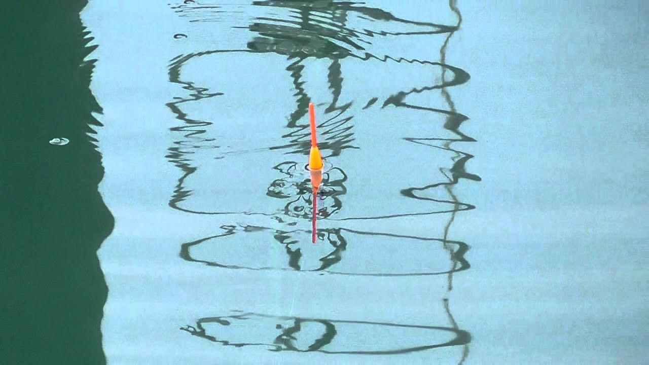 「大阪海上釣り堀サザン」攻略のための5つのポイント!おすすめの仕掛けなどを解説!