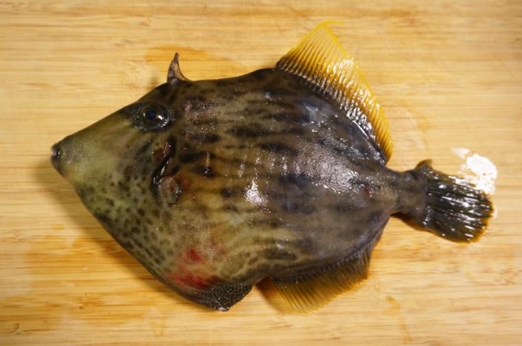 カワハギのおすすめ料理法12選!おいしく食べられる簡単レシピをご紹介!