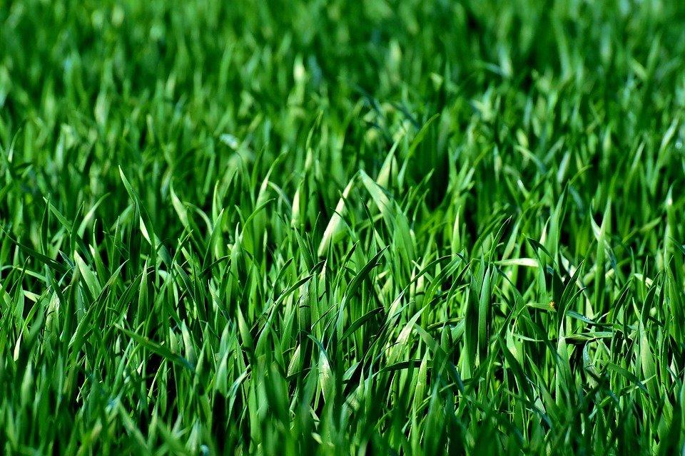 草」とは?意味や使い方をご紹介 | コトバの意味辞典