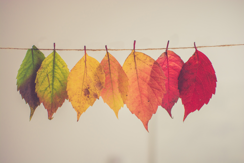 11月といえば】風物詩やイベント・お出かけスポット・旬な食べ物など総 ...