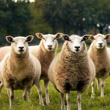 牡羊座O型の男性・女性の性格11選と恋愛傾向・相性!仕事の運勢は?