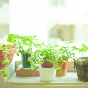 100均の観葉植物は植え替えたらおしゃれなインテリアに!