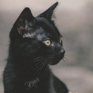 【夢占い】黒猫の出る夢の意味は?幸運が訪れるって本当?