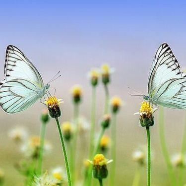 【夢占い】蝶の夢の意味15選!黒い/青い/白/捕まえる