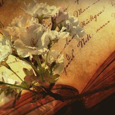 おしゃれな英語の花言葉35選!大切な人に気持ちを込めて花を贈ろう