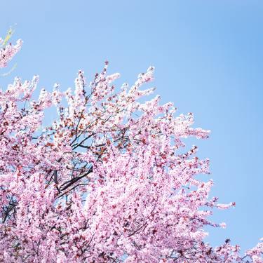 【4月といえば】風物詩やイベント・お出かけスポット・旬な食べ物など総まとめ