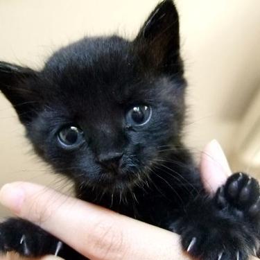 黒猫の名前オス・メス別20選!人気の黒猫キャラクターも紹介!