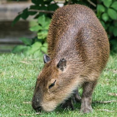 【伊豆シャボテン動物公園】オンライン生配信で動物のおやつあげ体験!