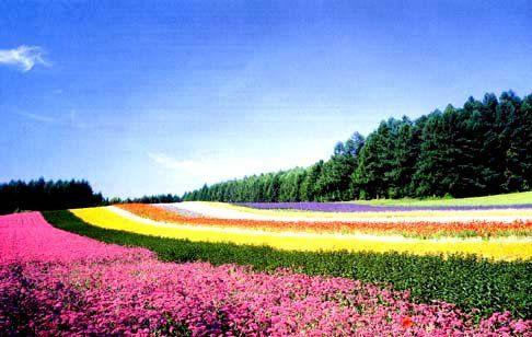 北海道のおすすめ観光地・夏編!旅行の参考に!カップルに人気の場所は?