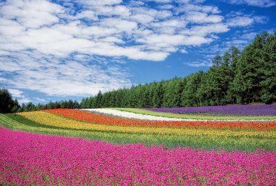 北海道お土産ランキング・ベスト25!お菓子やスイーツのおすすめまとめ!