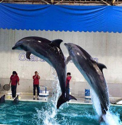 小樽「おたる水族館」の魅力!ショーが面白いと大人気!デートでも!