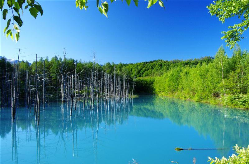 美瑛『青い池』が美しい!青い理由は?冬にはライトアップも!行き方も紹介!