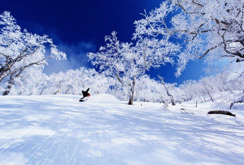 青森のスキー場ランキングBEST7!初心者におすすめは?ナイター情報も!