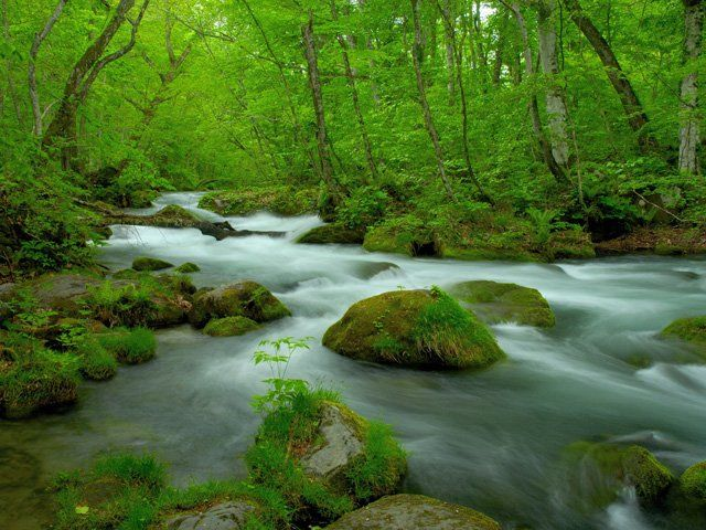 奥入瀬渓流を散策!おすすめの温泉やランチ情報あり!美しい景色が最高!