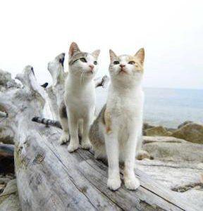 愛媛の青島は猫の島!行き方・アクセス・フェリー・観光・ツアー情報など