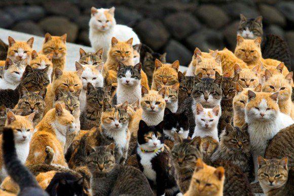 青島は猫の島!愛媛県観光の変わり種!行き方・アクセス・注意点など!