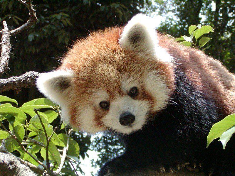 盛岡の動物園『盛岡市動物公園』で癒される!かわいい生き物が人気!