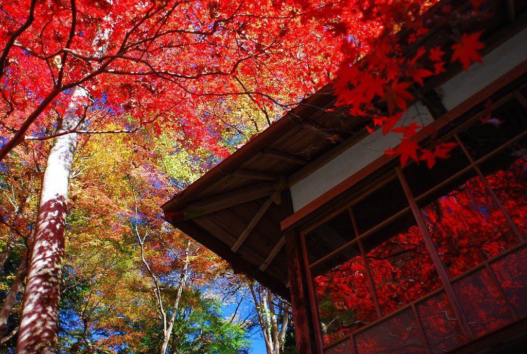 飯能の観光おおすすめスポット紹介!紅葉など自然が素晴らしい!