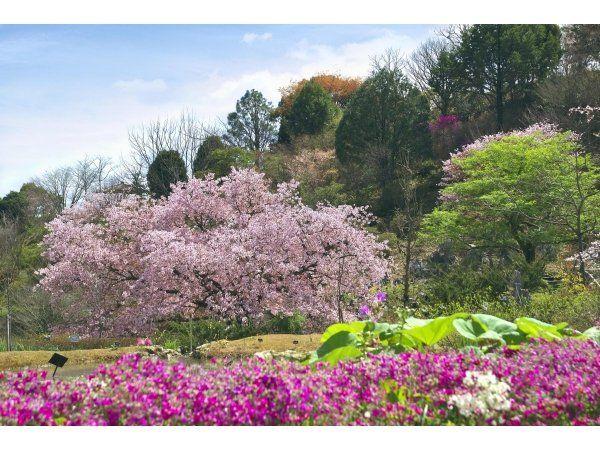 牧野植物園へのアクセスは?五台山展望台は観光スポット!植物図鑑も有名!