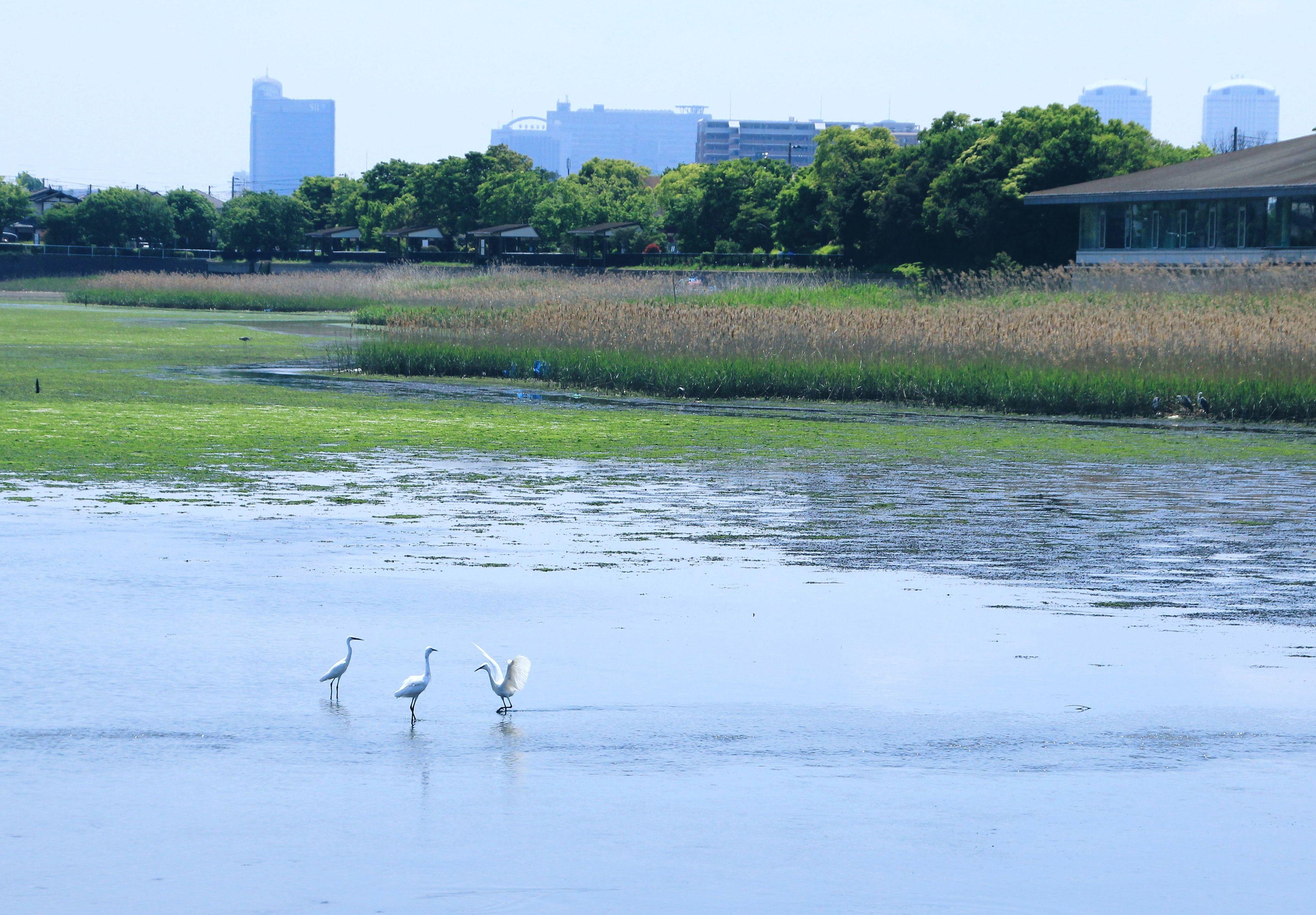 谷津干潟で野鳥を観察しよう!豊かな自然に施設も完備!潮干狩りも!