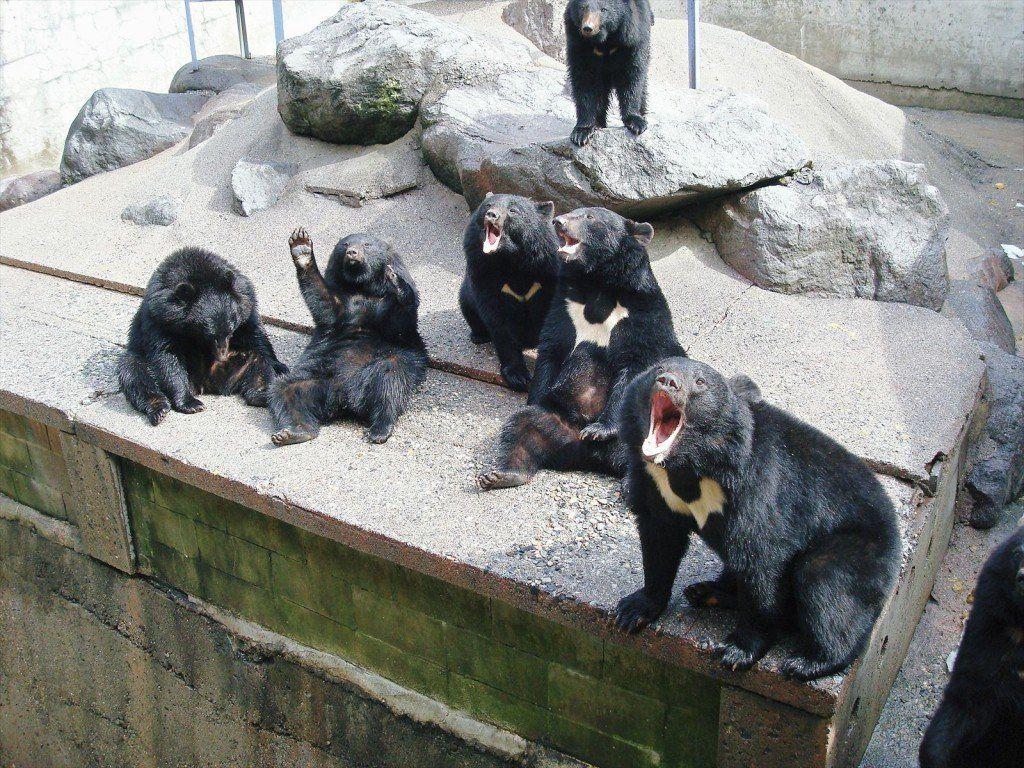 奥飛騨クマ牧場の料金は?熊の油がお土産として人気って本当?