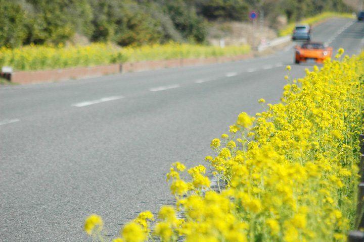 房総フラワーライン!花摘みも楽しめる千葉のおすすめドライブコース!